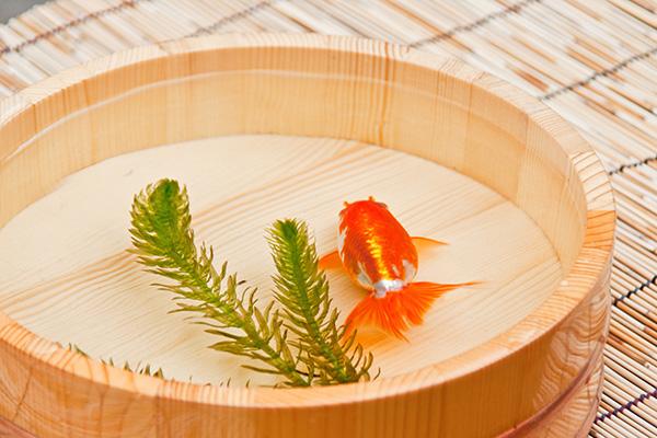 京都のお盆イメージ金魚
